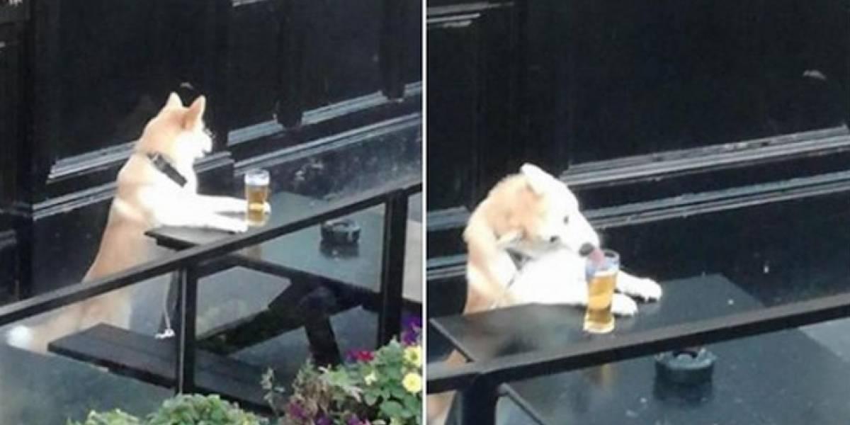Dejó a su perro cuidando la cerveza sin imaginar lo que pasaría