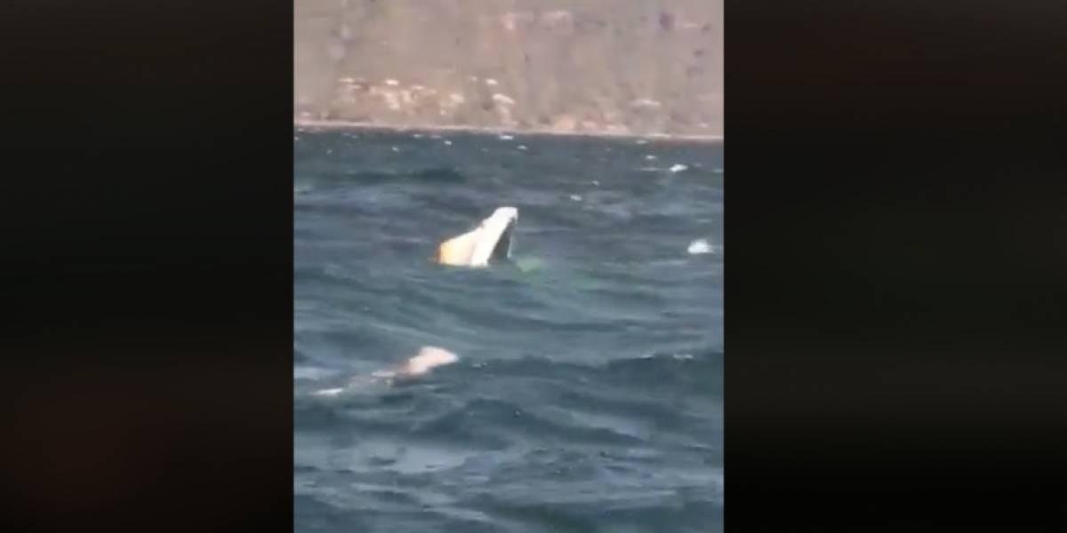 VIDEO. Usuario de embarcación captó el trágico hundimiento de lancha en lago de Atitlán