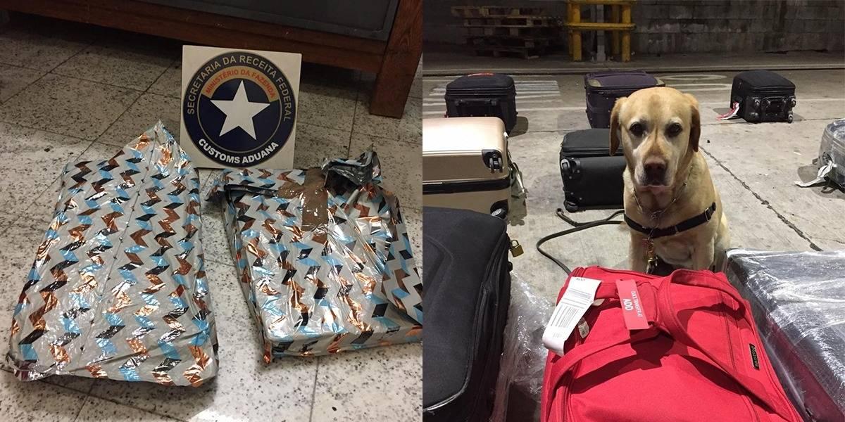Cão farejador encontra 8 kg de cocaína em embalagem de 'presente' no aeroporto de Guarulhos