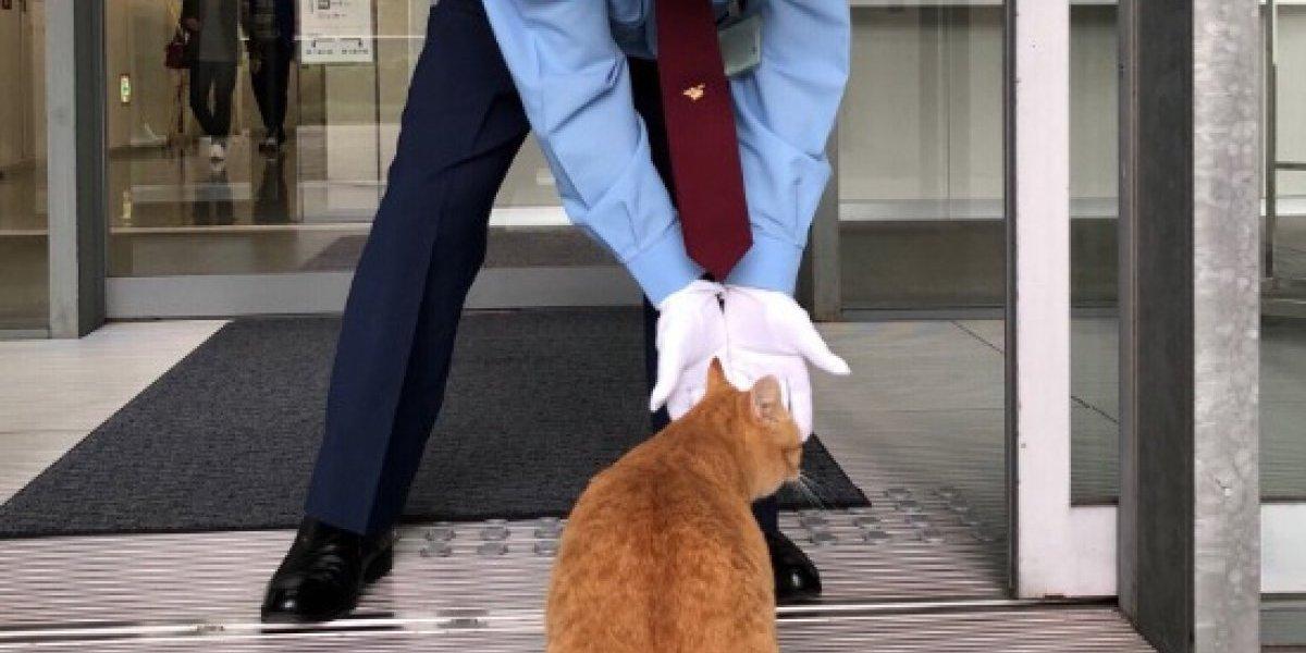 Me pareció ver un lindo gatito: la tierna historia que se volvió viral de los gatos que llevan años tratando de entrar a un museo