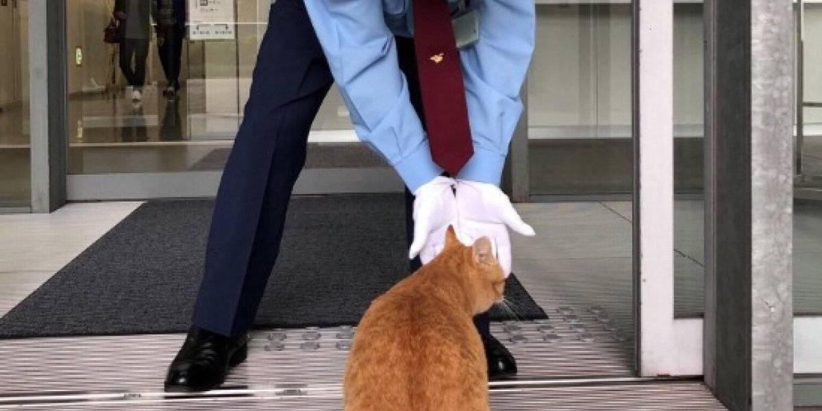 La tierna historia de los gatos que llevan años tratando de entrar a un museo