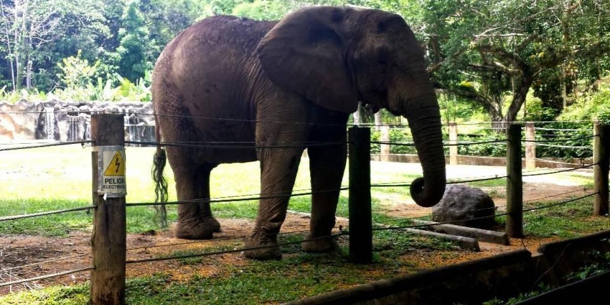 Solicitan detener el traslado de la elefanta Mundi