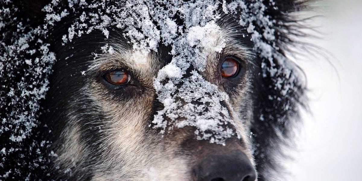 Temperaturas bajo cero congelan perros en Zacatecas