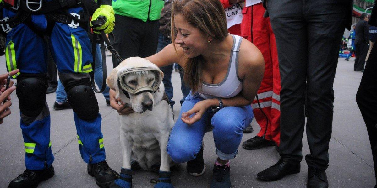Rescatista canina 'Frida' desfila por aniversario de la Revolución