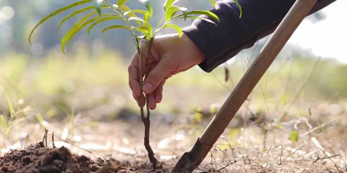 Juez ordena a ecocida plantar y cuidar 8 mil árboles por un año