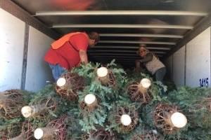 Plaga en árboles de navidad