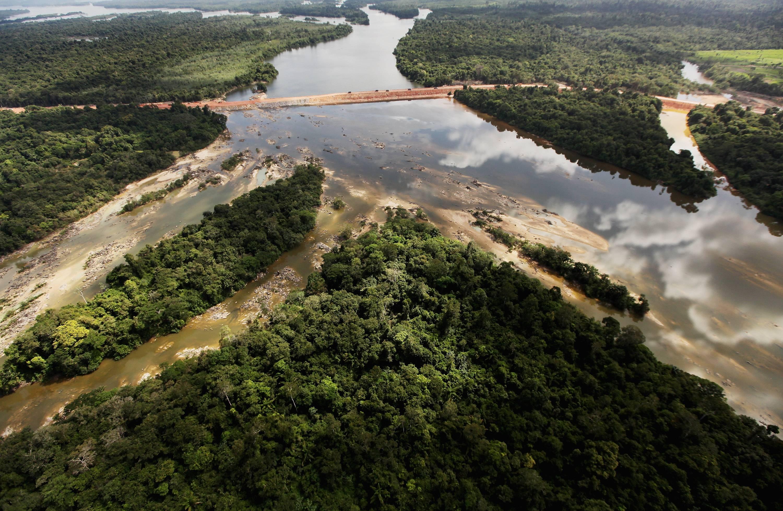 Encuentran alarmante cantidad de plástico en estómagos de peces del Amazonas