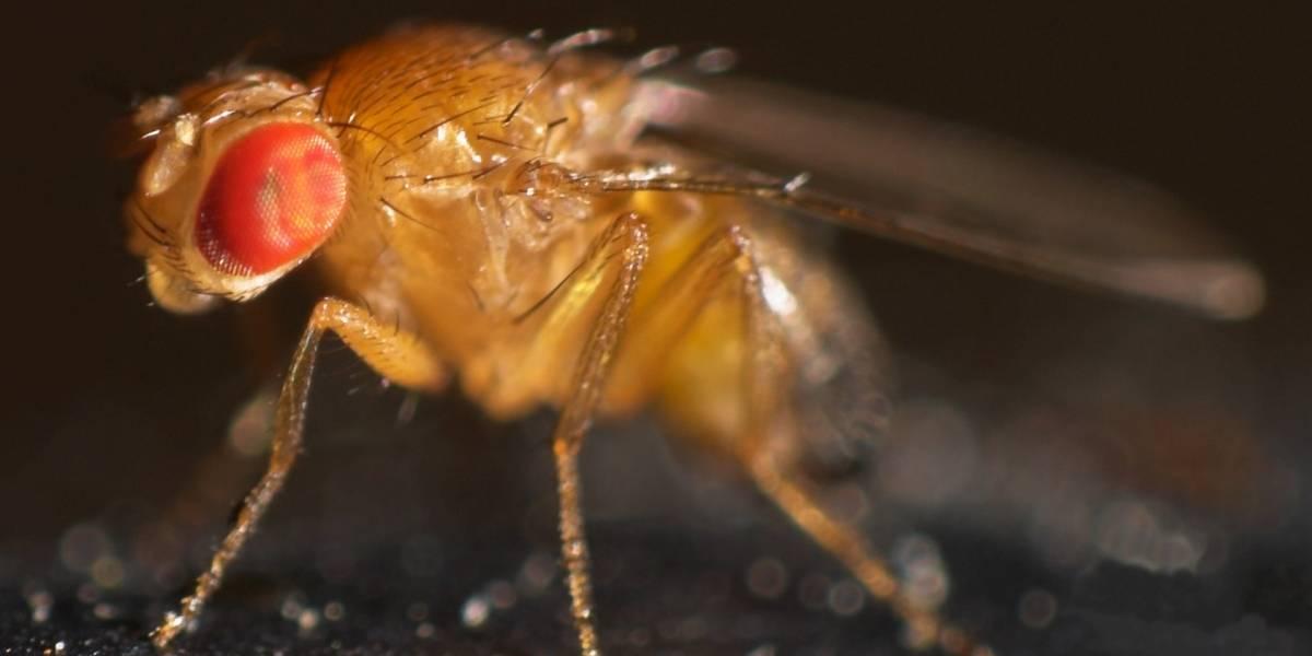 Parkinson y moscas: Científicos chilenos realizan investigación pionera en la enfermedad