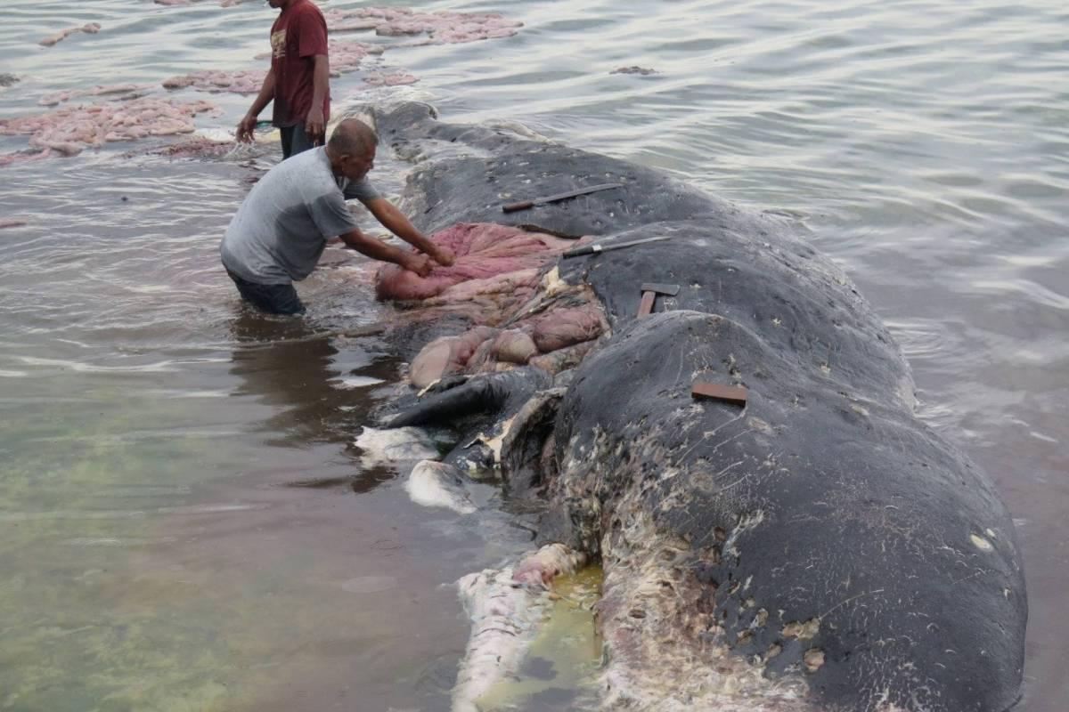 En Indonesia encuentran una ballena muerta con más de 6 kilos de plástico en el estómago REUTERS
