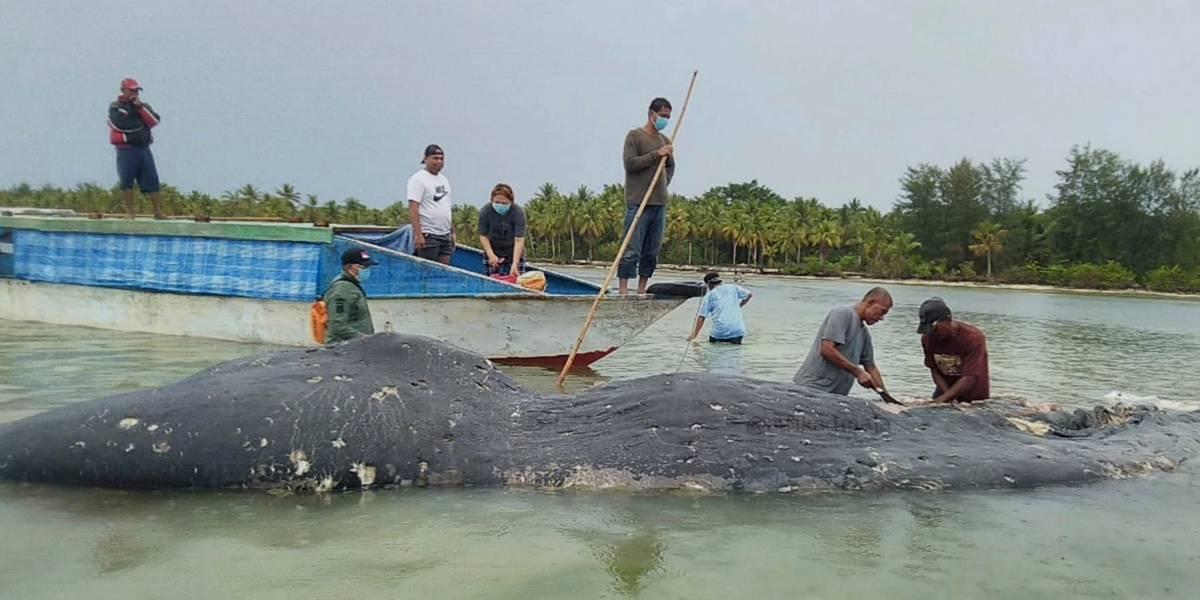 Más de 100 vasos, 25 bolsas y 4 botellas: encuentran una ballena muerta en Indonesia con más de 1.000 objetos de plástico en el estómago