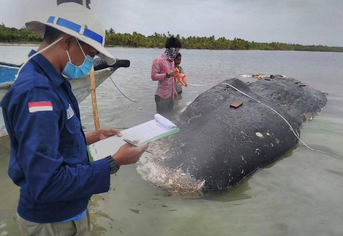 ballena estómago con plástico