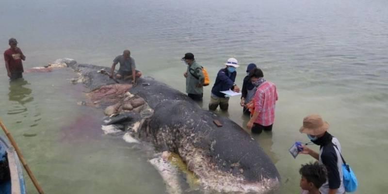 En Indonesia encontraron una ballena muerta con más de mil objetos de plástico en el estómago