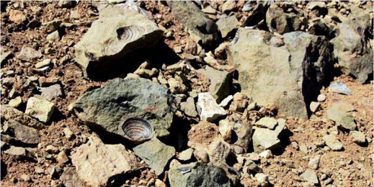¡Humanos otra vez! PDI investiga destrucción de fósiles milenarios en Chile Chico