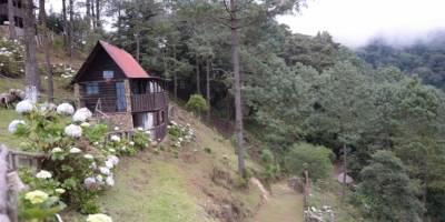 Pinabete en Jalapa