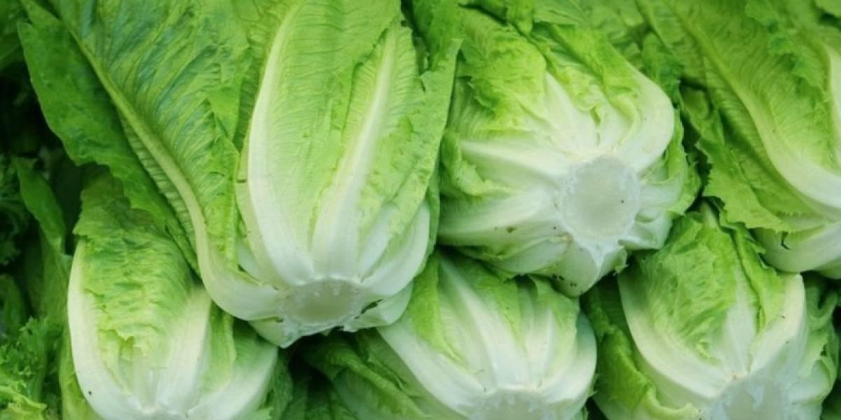 Alertan sobre nuevo brote de E. coli en lechugas romanas