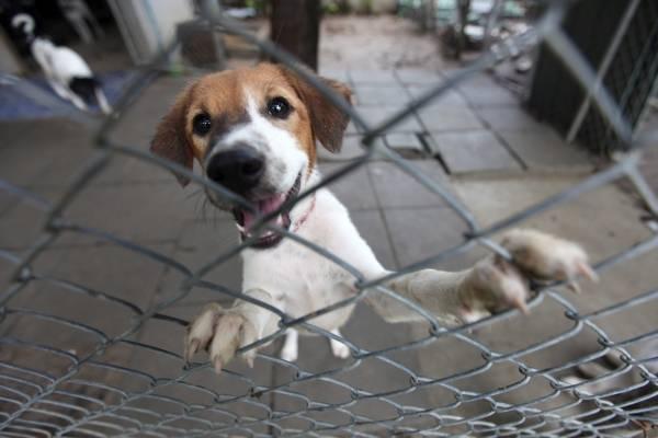 Campaña de donaciones para los perros y gatos más necesitados de Bogotá