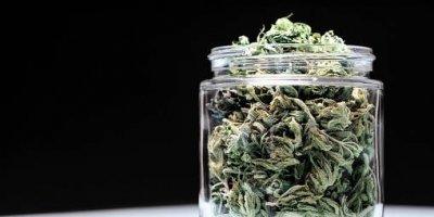 Cofepris libera primer paquete de 38 productos con cannabis