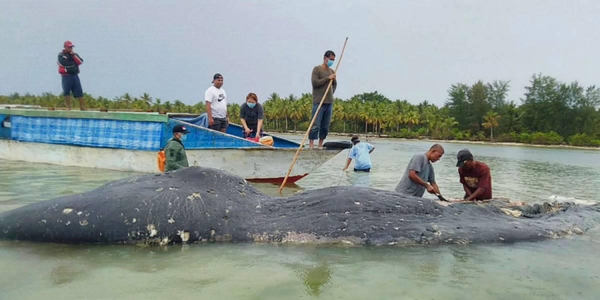 VIDEO. Encuentran 115 vasos de plástico dentro de ballena muerta