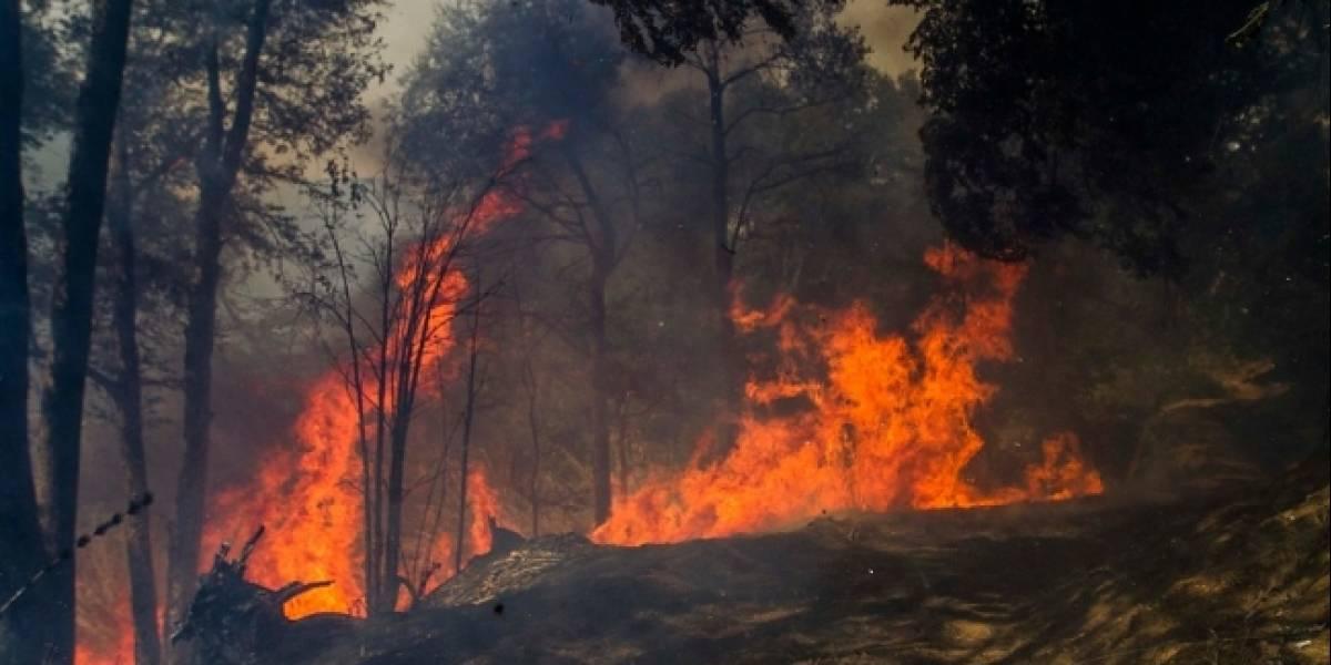 25 incendios en un día: Conaf se prepara para evitar desastres como los del verano