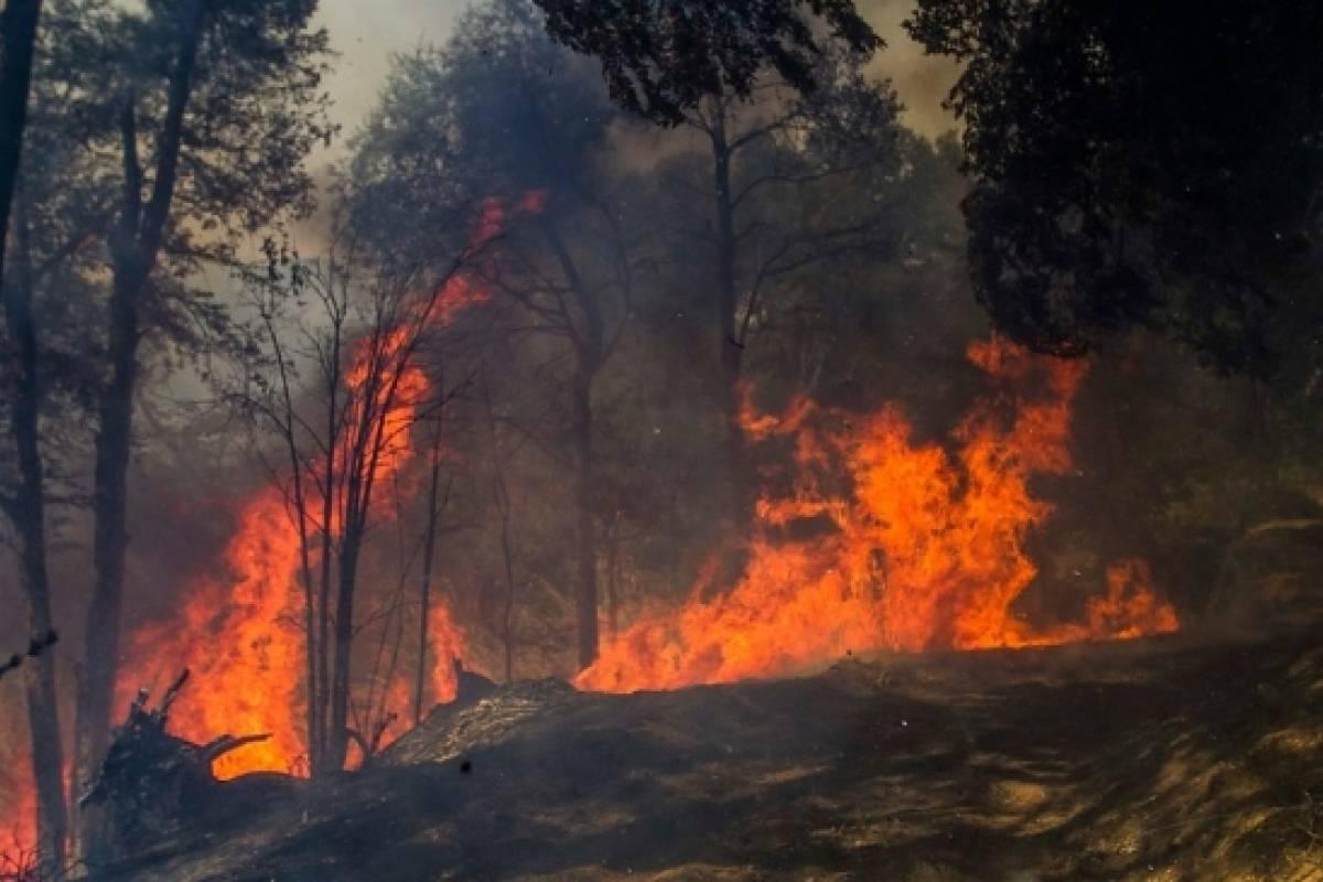 лесные стихийные бедствия просьба отправлять заявки