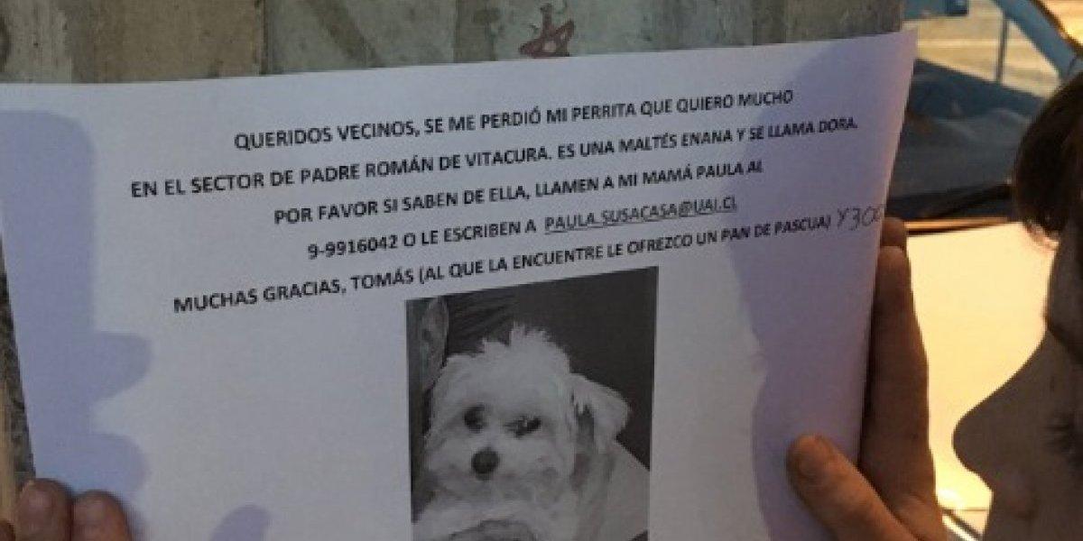 """""""Un pan de pascua y 3 mil pesos"""": niño ofrece tierna recompensa a quien lo ayude a encontrar a su perrita"""