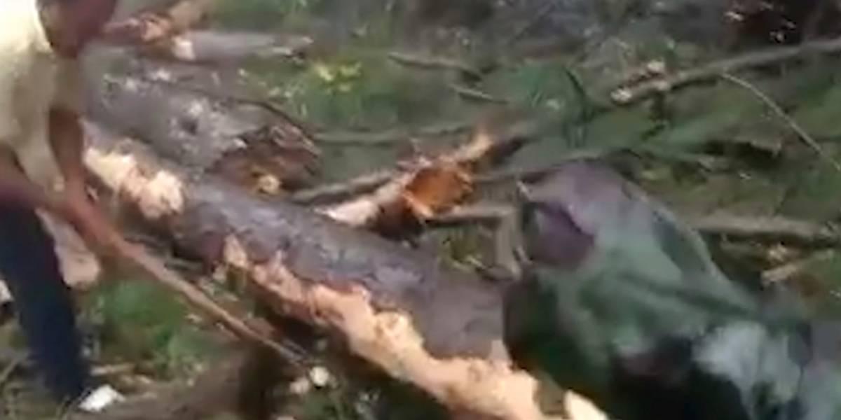 """La """"echaron"""" de su casa a los 12 años por tener su primera menstruación y murió cuando un árbol le cayó encima debido a una tormenta"""