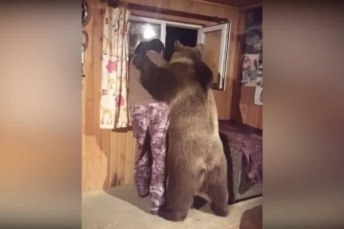 Abrazo De Oso Tierno Gesto De Animal Hacia Su Amo Se Vuelve Viral