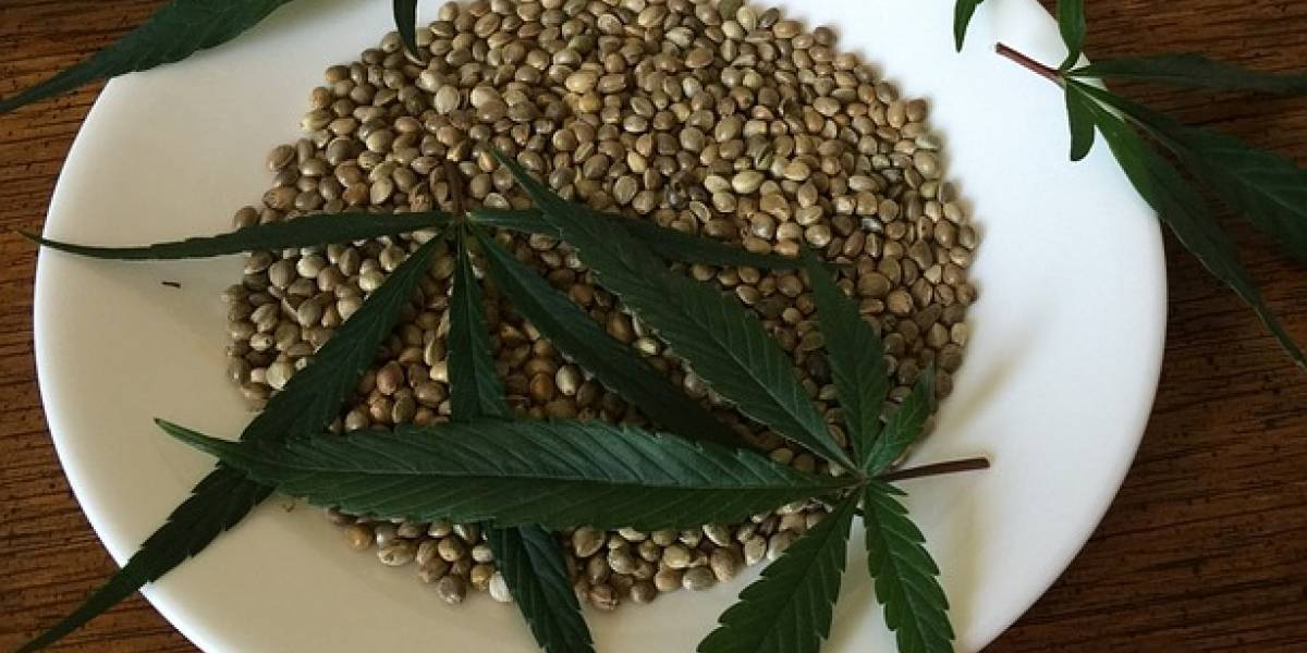 ¿Cuándo iniciará la venta de productos de marihuana en México?