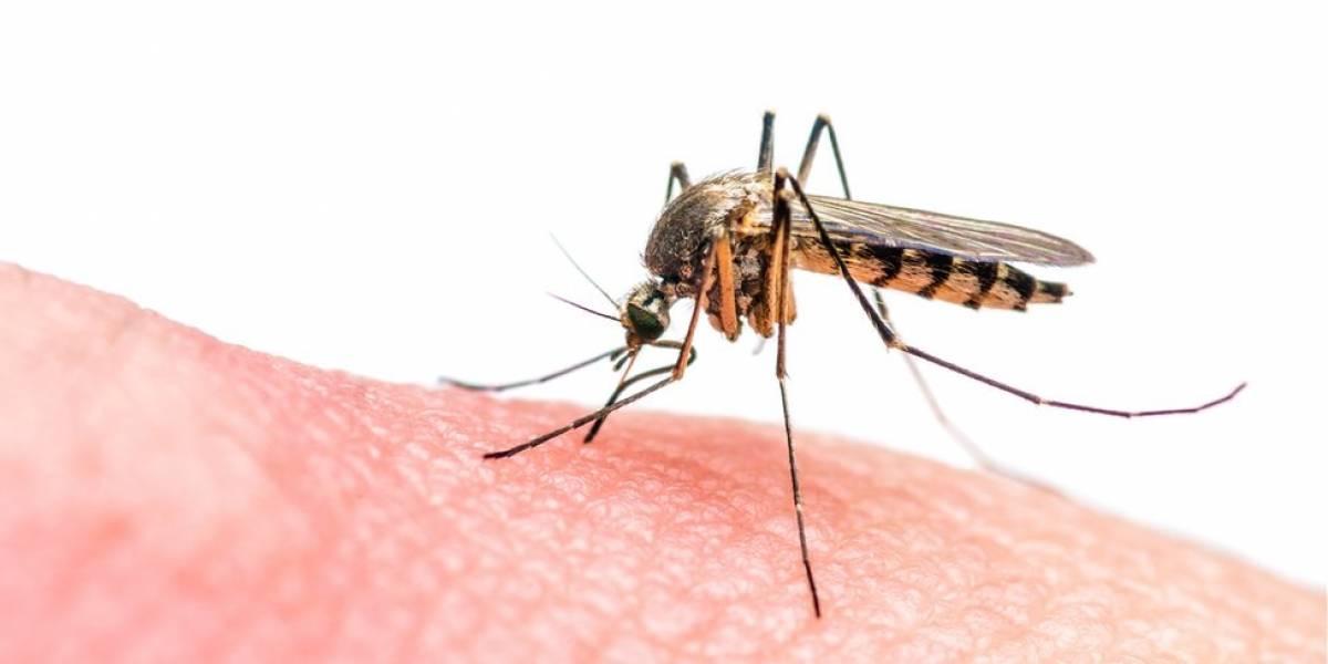 Cientistas brasileiros criam parasita transgênico que é nova esperança contra a malária