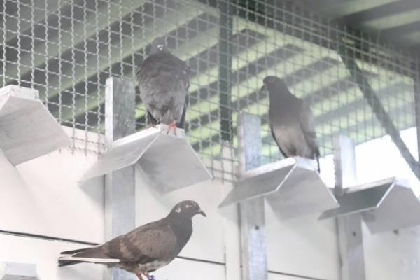Así es el nuevo Centro de Atención para palomas en Bogotá