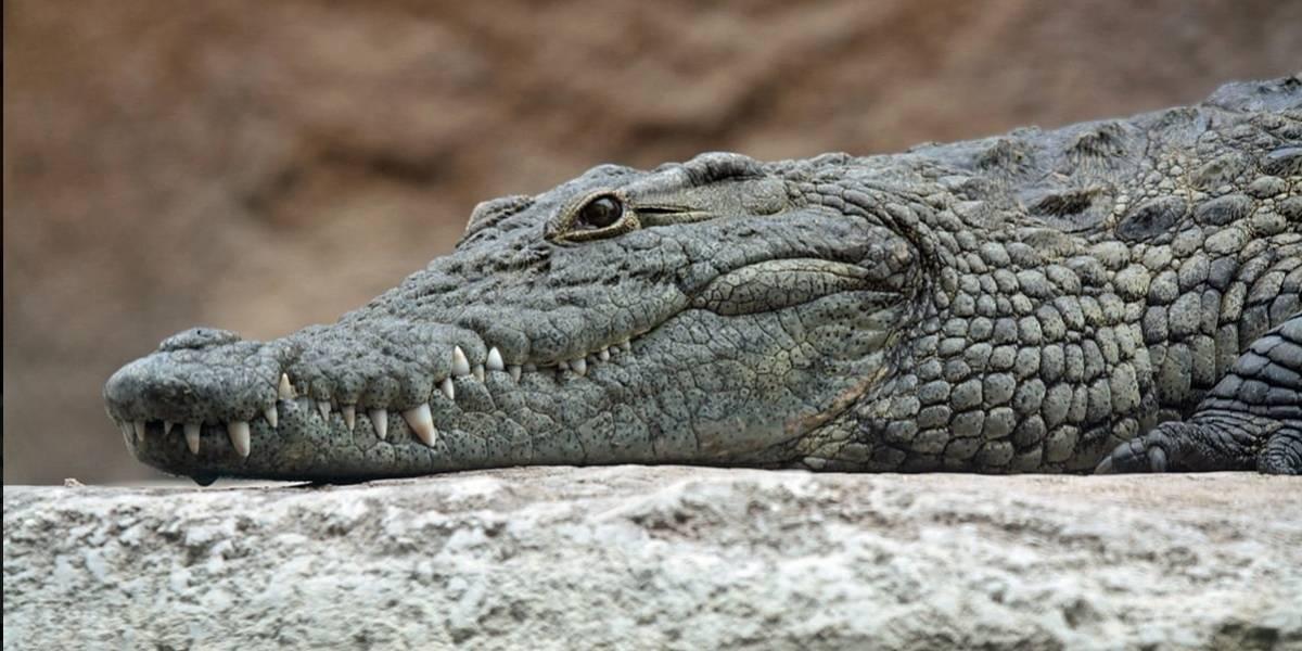 Pastor resolve batizar em lago cheio de crocodilos; adivinha o que deu