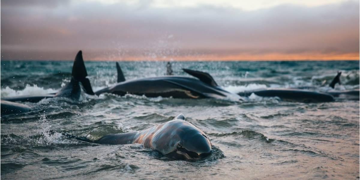 """""""Nunca esquecerei o choro delas': o relato da jovem que encontrou 145 baleias encalhadas em praia da Nova Zelândia"""