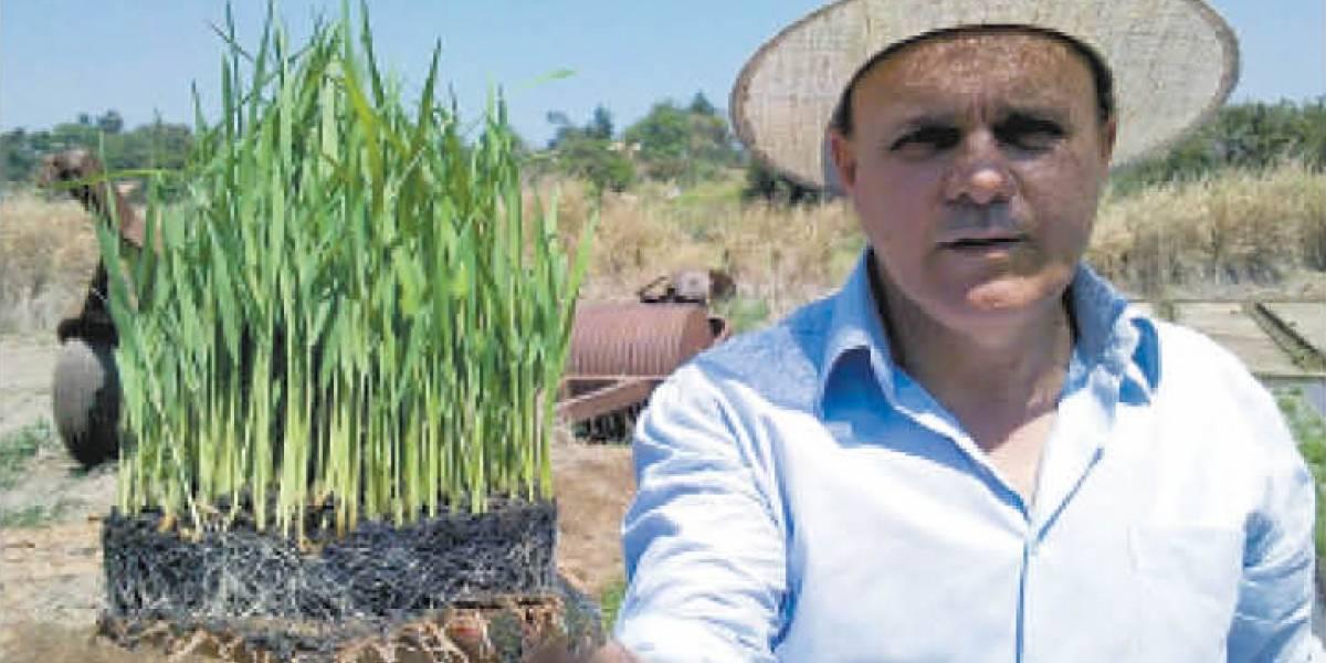 Parceria com chef Alex Atala dá impulso a mercado de arroz especial