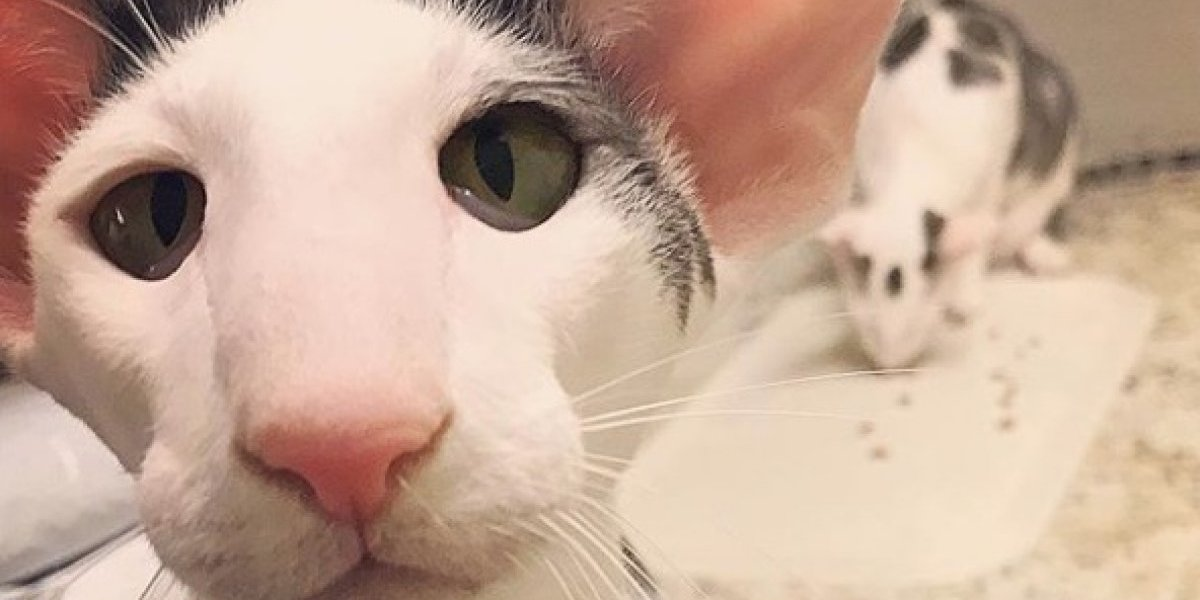 """Toda una estrella de Instagram: el gato de las """"piernas kilométricas"""" que tiene enamorado a Internet"""