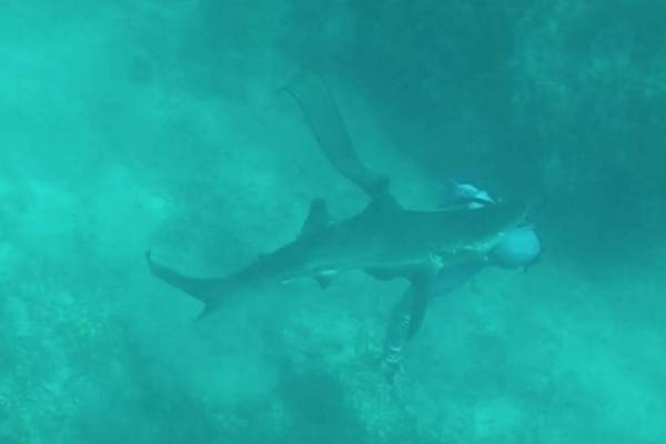 Ataques de tubarão