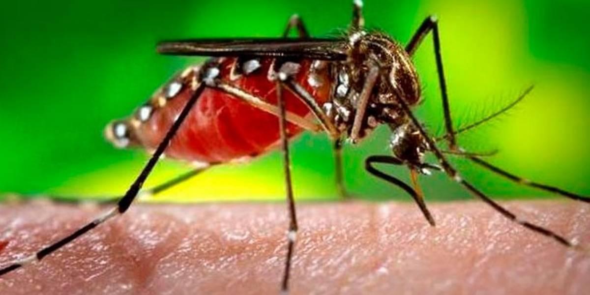 Más de mil casos de dengue durante este año en el país