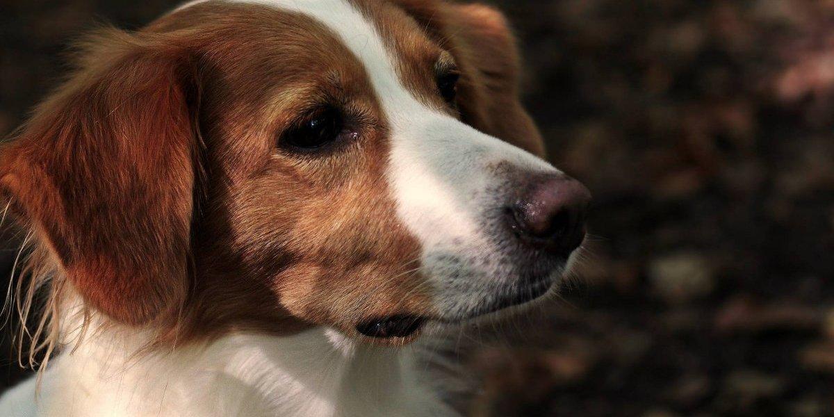 Os cachorros podem reconhecer pessoas mentirosas, diz estudo