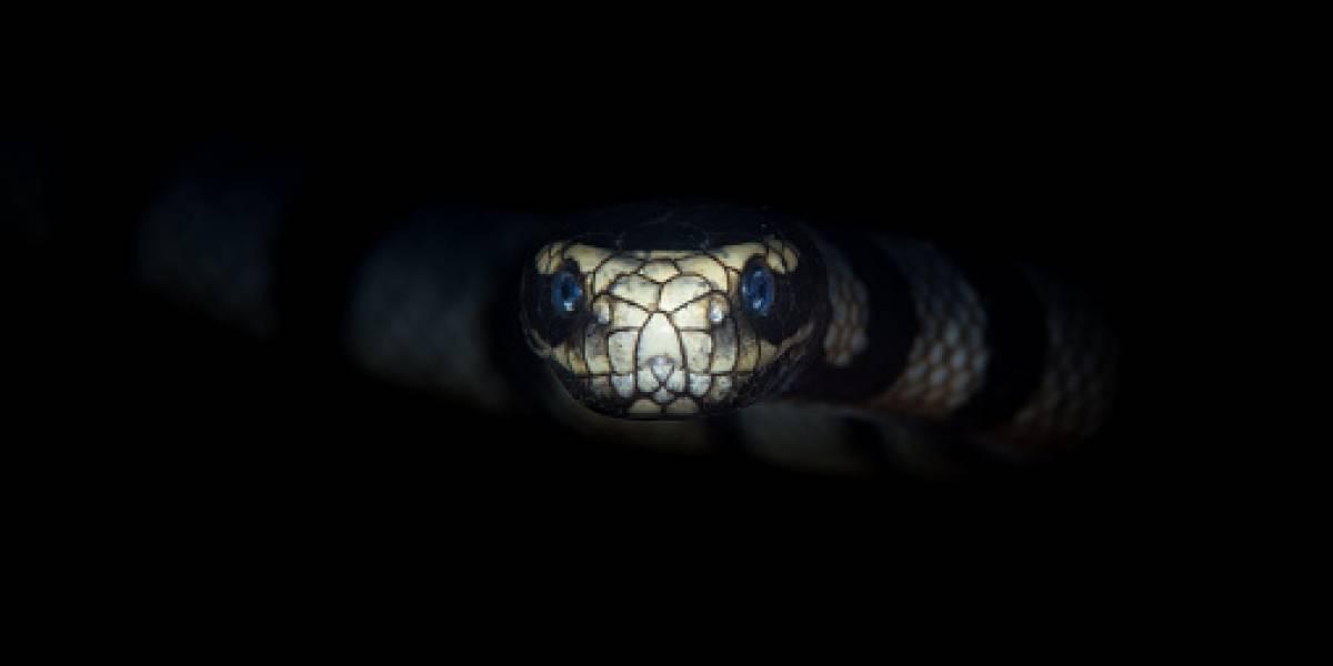 Hombre viola a mujer tras amenazarla con peligrosa serpiente: horas después se le escapó y murió envenenado tras ser mordido
