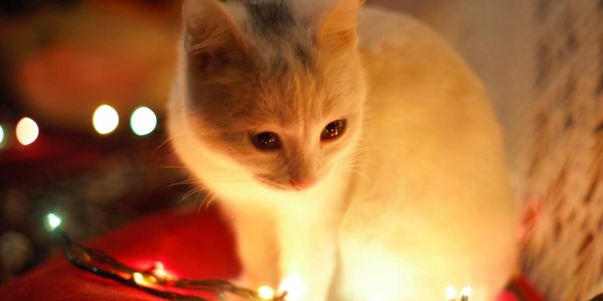 En Navicat 2018 podrás ayudar a gatitos necesitados