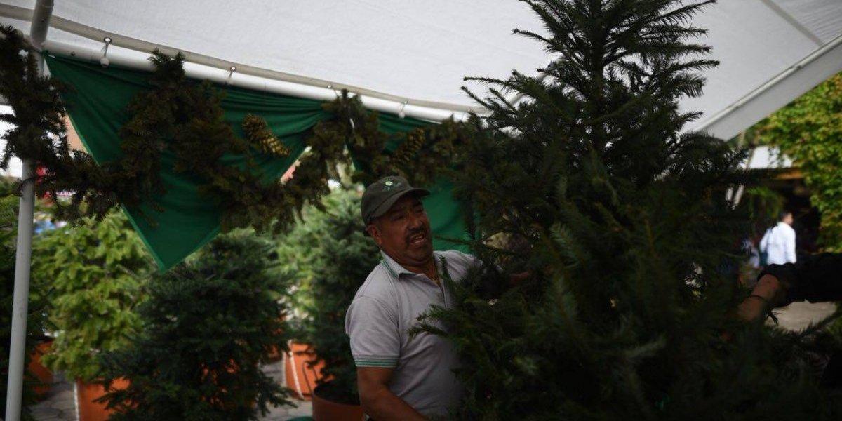 Ferias del Pinabete: Lugares para encontrar el árbol de Navidad que estás buscando