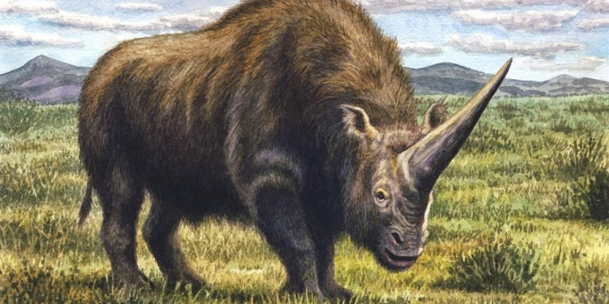 O 'Unicórnio da Sibéria', animal pré-histórico que conviveu com humanos na Terra
