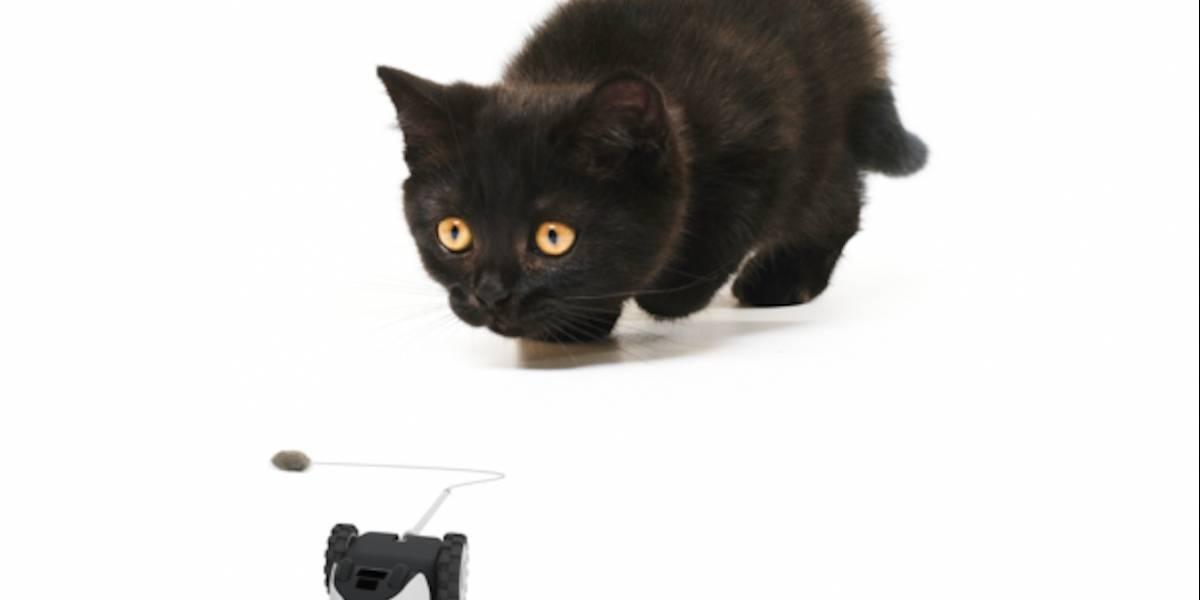 Este ratón robot mantendrá ocupado a tu gato