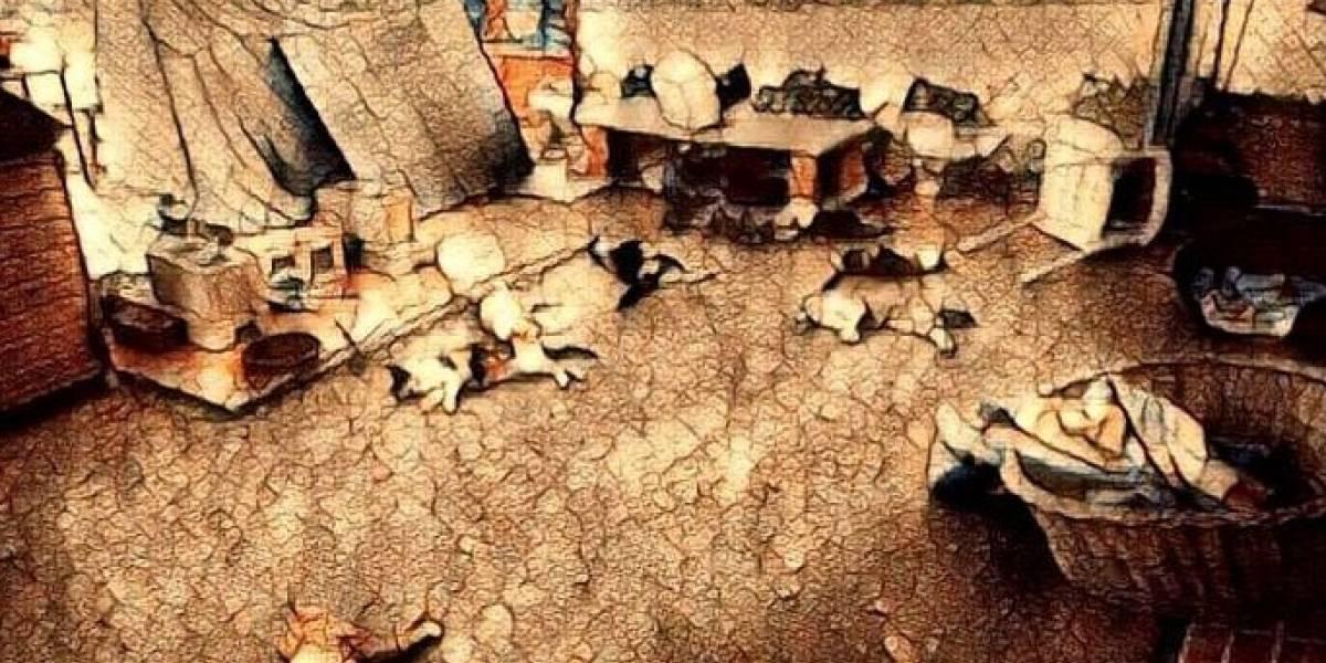 Brutal ataque a un refugio de gatos deja un saldo de nueve felinos muertos