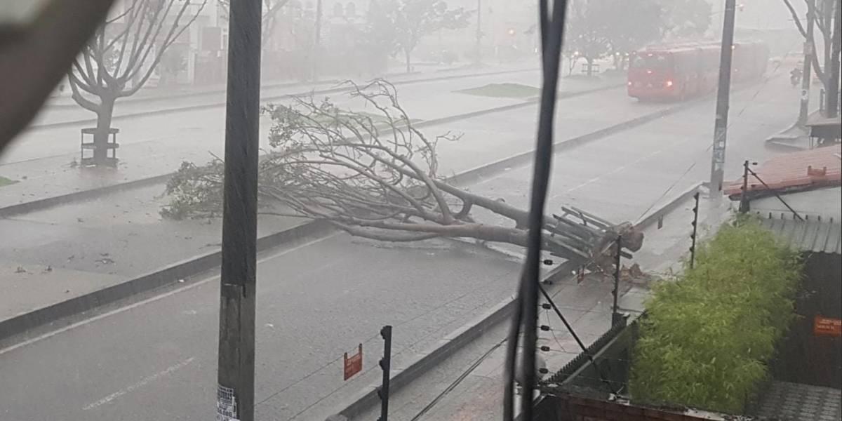 Rayo tumbó árbol durante las fuertes lluvias en Bogotá que se presentaron este miércoles