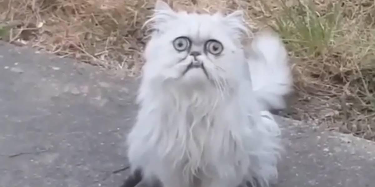 Conoce a Wilfred, el gato feo que la rompe en internet