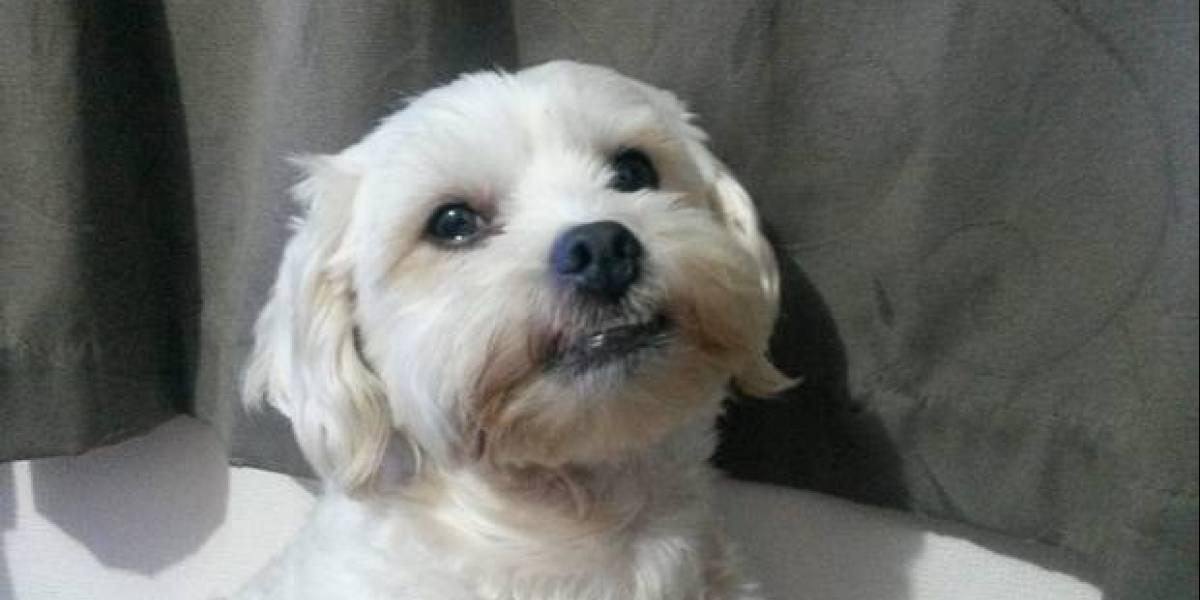 Perro es atrapado dejando desagradables sorpresas en las almohadas de sus vecinos