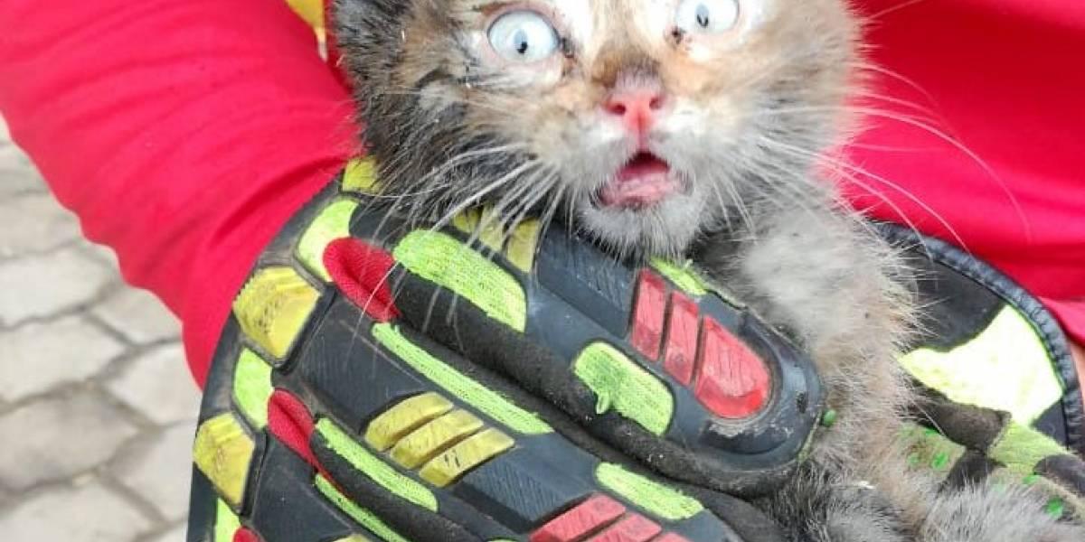 Quito: Bomberos rescataron a un gatito escondido en el motor de un auto