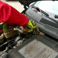Bomberos rescatan a un gato del moto de un auto