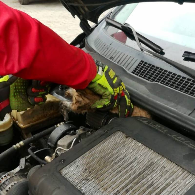 Bomberos rescatan a un gato del moto de un auto Twitter