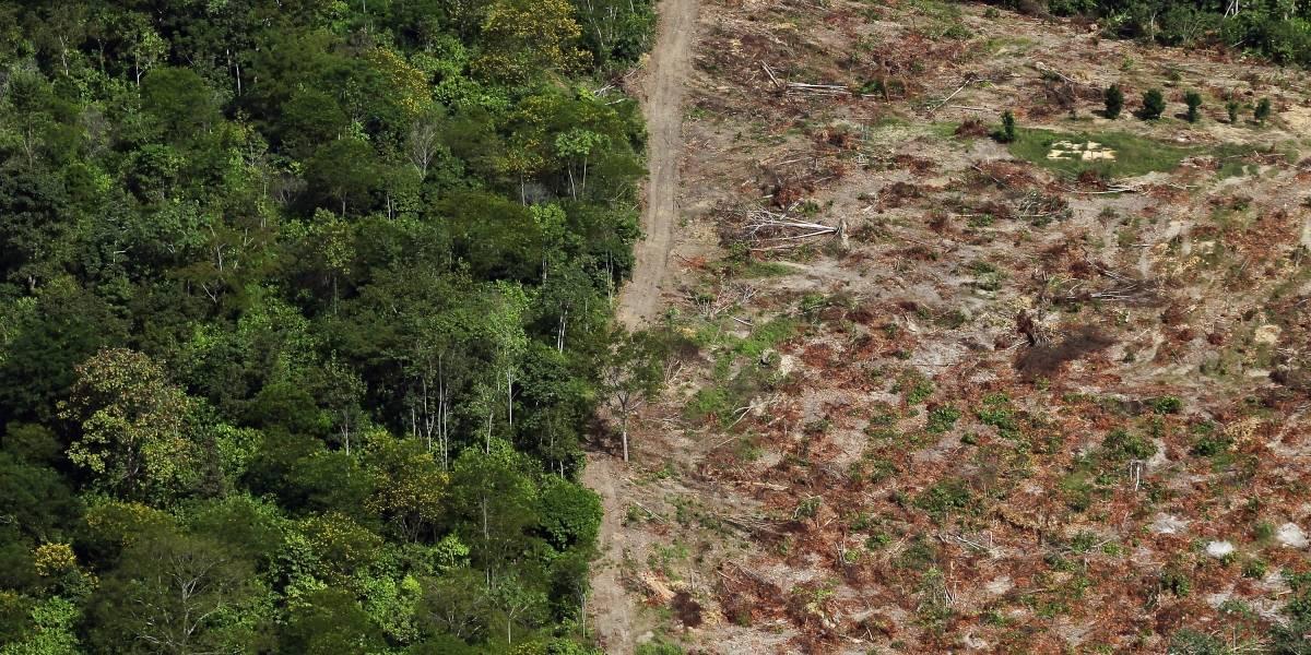 El Amazonas alcanza su mayor nivel de deforestación de los últimos años